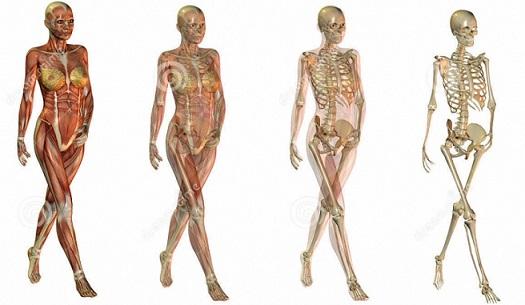 anatomy-female-body-anatomy-bone-anatomy-human-body-1-1.jpg