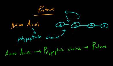 Белки-и-протеины.jpg