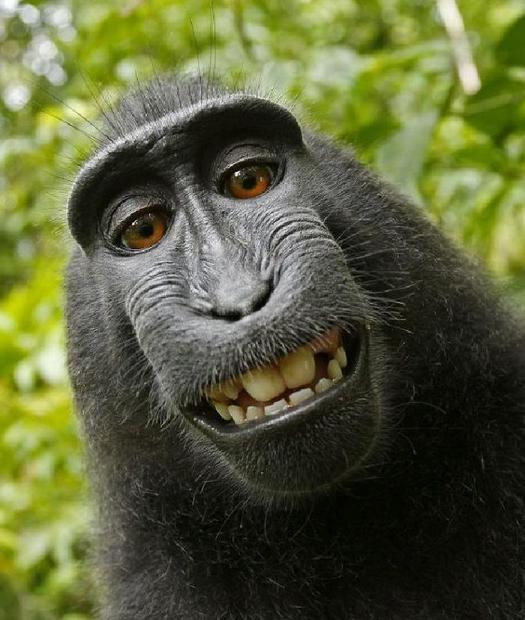 monkeysmile.jpg