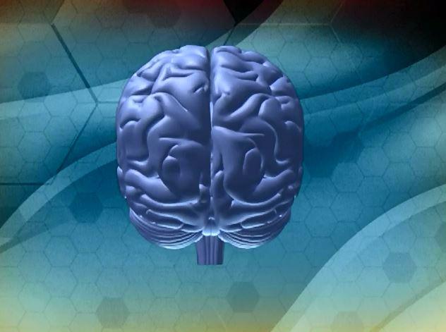 Нейробиология в пов жизни 10.JPG