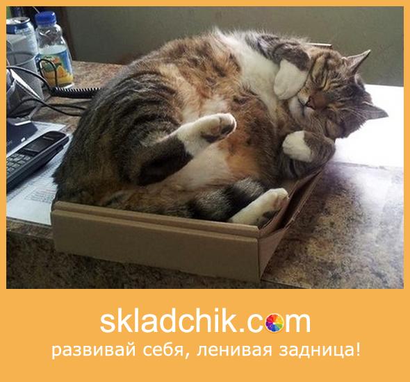 skmot_cat_logo.png