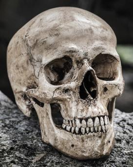 Skull_Reference.jpg