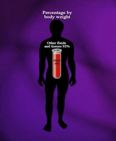 Тело-человека 2.JPG