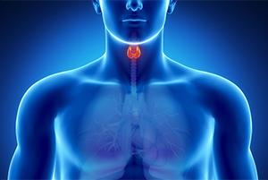 thyroid-s.jpg